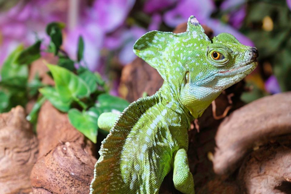 Grünes Reptil in einem Terrarium